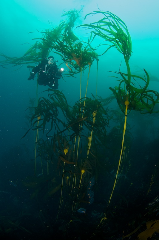 Vanessa and Bull Kelp