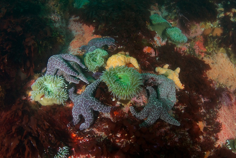 Anemones and Starfish