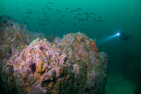 Outer Pinnacles and Aumentos Reef 03/12/2017