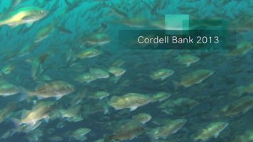 Cordell Bank, 2013